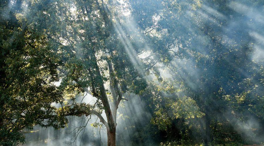 Die Magie des Lichtes