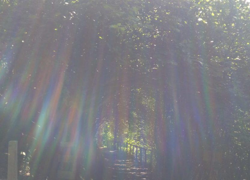 Im Licht finden lassen